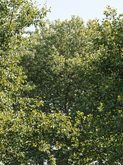 Bomen (ericderedelijkheid) Tags: bomen trees