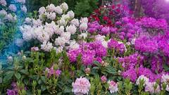 Colourful (Travis Daki) Tags: flovers flower color colour flora outdoors park