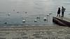 il fotografo / the photographer (frank28883) Tags: cigni fotografo pontile attracco approdo lungolago lago