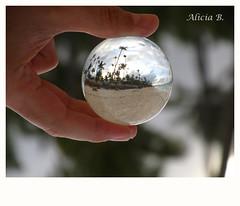 Paraíso Atrapado (Alicia B,) Tags: playa puntacana repúblicadominicana caribe