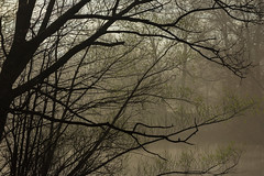 Dawn at Scarboro - 2 (johnmcboston) Tags: dawn boston park fog franklin walk pond water