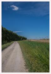Nei pressi del Sile (Outlaw Pete 65) Tags: paesaggi landscapes cielo sky nuvole clouds alberi trees strada road erba grass natura nature colori colours fujixe3 fujinon1855mm cavallinotreporti veneto italia