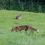 Wheres the bunnies? thumbnail