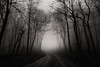 Lonely Road (James Duckworth) Tags: georgia jamesduckworthphotography northgeorgia fineartphotography fog forest landscape light limbs lonely nature nobody road spooky trees