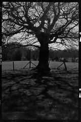 Untitled (agataurbaniak) Tags: zeissikonsuperikonta zeiss ikon super ikonta 5312 zeissopton tessar105mmf35 opton tessar 105mm 105 f35 35 mediumformat 6x9 folder camera rangefinder analog analogue 120 film ilford fp4 ilfordfp5plus 400 400asa monochromatic monochrome blackandwhite negative catsfield henleysdown