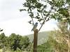 IMG_8037-copy (Claudio Vázquez @ cvphotoart) Tags: california losangeles bird westernbluebird sialiamexicana