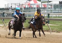2018 Pimlico Race track (27) (maskirovka77) Tags: pimlico dirt mare race racehorse threeyearold turf yearling