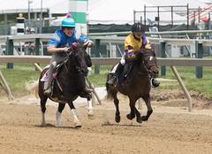 2018 Pimlico Race track (26) (maskirovka77) Tags: pimlico dirt mare race racehorse threeyearold turf yearling