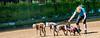 Dog owner skates on sand (Tony Shertila) Tags: wallasey england unitedkingdom europe wirral newbrighton beach coast dogs animal