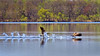 Wet Take-Off (Bob's Digital Eye) Tags: action birds birdsinflight bobsdigitaleye canadageese canon canonefs55250mmf456isstm flicker flickr geese lake may2018 t3i water waterfowlofnorthamerica