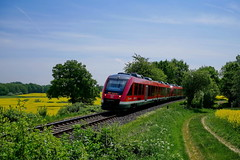 P1560206 (Lumixfan68) Tags: eisenbahn züge triebwagen baureihe 648 alstom coradia lint 41h deutsche bahn db regio dieseltriebwagen wahlstorf raps rapsfelder