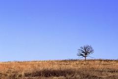Lonely (Modkuse) Tags: minimal minimalist minimalism tree singletree nature sky skyscape landscape slr canon ae1 fuji fujifilm velvia 50mm 50mmf18 canonae1