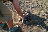 May 15, 2018 (58) (gaymay) Tags: california desert gay love palmsprings riversidecounty coachellavalley sonorandesert geocaching heartburn hunt heat sun rocks