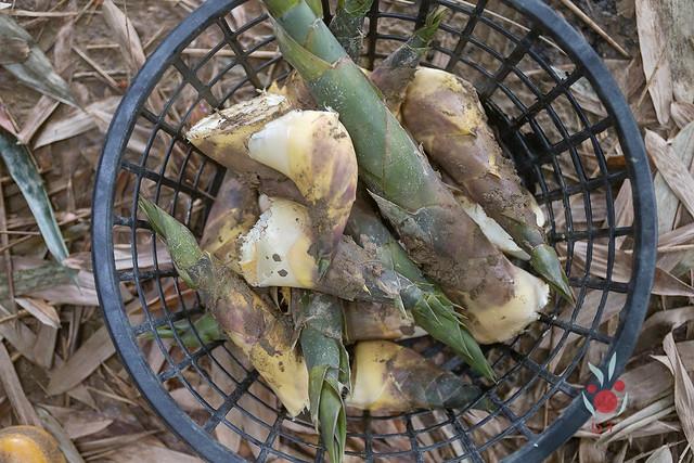 鳳梨、竹筍通通吃酵素長大,無農藥耕種 三竹居士 (18)
