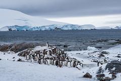 Antártida - Explore 20-05-2017 (robertopastor) Tags: antarctica antarctique antarktika antartic antártida caletacierva fuji robertopastor xt1 xf1655mm aq