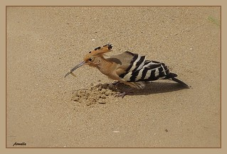 A visitor on the beach !