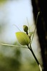 live like it's spring (courtney065) Tags: nikond800 nature landscapes tree foliage leaves tendrils spring blue green greeneden flora blurred textures depthoffield springgrowth newgrowth soft delicate serene joy blooms serenitynow