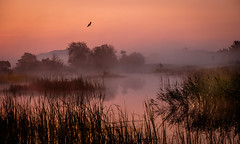 brume (joboss83) Tags: sun fuji provence var france xt1 landscape paysage matin brouillard bird oiseaux nature sauvage parc photographe sole paesaggio dim dimaa dimma groupenuagesetciel