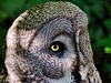 Harry Potters Owl. Hedwig . (kopiecmarcin) Tags: owl bird nature animals zoo green bokeh fly white olympus omd10