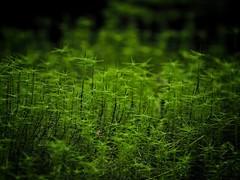 just moss (paddy_bb) Tags: olympusomd paddybb 2018 travel mft microfourthirds deutschland germany elbsandsteingebirge wald minimalism moss contrast frühjahr detail moos grün