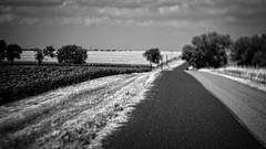 Maize & Wheat (Anne Worner) Tags: anneworner blackandwhite cr124 em5 jonah lensbaby oaktrees olympus silverefex texas asphalt bw bright clouds color composerpro corn countryroad countryside farms fields fileds food grass maize manualfocus manualfocuslens mono outdoors outside produce road roadway sky sunny sunshine trees twist60 wheat