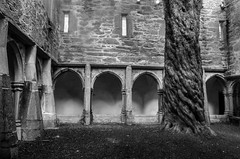 The Yew Tree in the Cloister (beeldmark) Tags: interieur zwartwit gebouw kerk ierland killarney building cillairne inside ireland kerry éire ie boom tree yewtree klooster monastery cloister