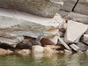 hidden-canyon-kayak-lake-powell-page-arizona-southwest-0152 (Lake Powell Hidden Canyon Kayak) Tags: kayaking arizona kayakinglakepowell lakepowellkayak paddling hiddencanyonkayak hiddencanyon slotcanyon southwest kayak lakepowell glencanyon page utah glencanyonnationalrecreationarea watersport guidedtour kayakingtour seakayakingtour seakayakinglakepowell arizonahiking arizonakayaking utahhiking utahkayaking recreationarea nationalmonument coloradoriver antelopecanyon gavinparsons