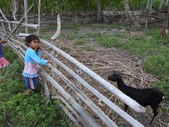 On the farm (undpclimatechangeadaptation) Tags: undp indonesia ntt creditmarietomovaundp