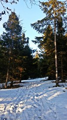 Koszarawa, Poland (trampinthevoid) Tags: winter snow mountains mountain beskid żywiecki beskidy zima march forest trees