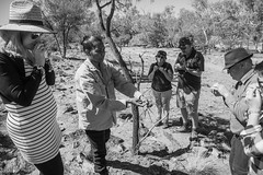 mutawintji heritage tour - 1370 (liam.jon_d) Tags: nsw mono aboriginal aboriginalguide aborigine arty australia australian bw billdoyle blackandwhite bushticker bynango bynangorange bynguano bynguanorange cultural culturalsite culture guidedtour heritage heritagesite indigene indigenous inland landscape monochrome mootwingee mootwingeenationalpark mutawintji mutawintjiheritagetours mutawintjinationalpark nationalpark nationalparksandwildlife newsouthwales outback outbacknewsouthwales outbacknsw party peopleimset reserve sacredsite tour touring tradition traditional traditionaluse west western westernnewsouthwales westernnsw pickmeset portraitimset