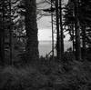 Willapa Bay, Washington (austin granger) Tags: forest trees washington ivy grass shoreline bay square film gf670 willapabay
