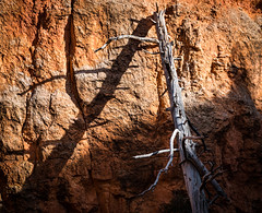 Leaning old tree (languitar) Tags: shadow utah tree nature pine brycecanyon dead dry wall trunk usa rocks brycecanyonnationalpark unitedstatesofamerica shadows bryce unitedstates us