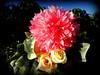 Mother's Day Bouquet (Elaine31) Tags: flowerwatcher languageofflowers pink flower