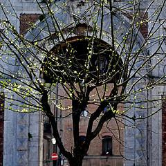 Primavera a Siena (pom'.) Tags: panasonicdmctz101 siena toscana tuscany italia italy europeanunion april 2018 tree green spring springtime primavera architecture 100 200 5000