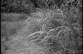 grasses, pathway, Community Park at Craggy Park, West Asheville, North Carolina, Kodak VR35 K12, Kodak TMAX 400, Ilford Ilfosol 3 developer, 5.15.18