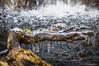 La raíz helada (SantiMB.Photos) Tags: 2blog 2tumblr 2ig hielo ice cascada waterfall raíz root montseny invierno winter geo:lat=4177282815 geo:lon=246687438 geotagged riellsriellsiviabrea cataluna españa esp