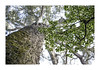 Big Tree (memories-in-motion) Tags: tree big tsitsikamma southafrica heritage nature old 800 years canon bokeh leaf forest high imagine imagination green moss trunk 5dmarkiv ef70300mm