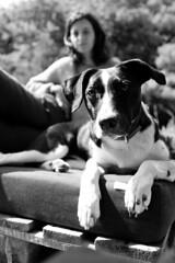 Lazy sunday afternoon (mripp) Tags: art black white mono monochrom dog dogs pet pets haustier sony rx1rii