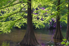 wandelbos (Jan van de Rijt) Tags: wandelbos tilburg canoneos50d trees 1785mm darktable spring canonefs1785mmf456isusm