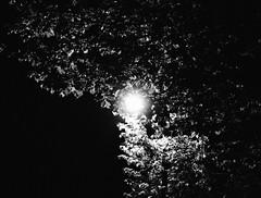 (saraconve) Tags: light tree luce alberi albero trees nature natura mothernature black blackandwhite white bw bnw bianco biancoenero bn nero contrast contrasto night notte nightphotography photography digitalphotography noise grain grainy disturbo rumore nikon nikoncoolpix nikoncoolpixp600 nikonp600 nikonitalia nikonphotography coolpix coolpixp600 p600 cielo sky