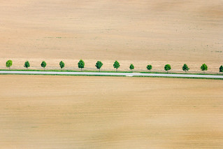 Trees In A Row - 05