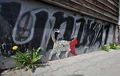 unique (rafasmm) Tags: street streetart cat zakopane poland polska mountain outdoor color unique sigma 1020 ex nikon d90