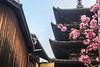 Tokyo, Kyoto & Nara, Japan (SuMeX) Tags: japan tokyo kyoto nara
