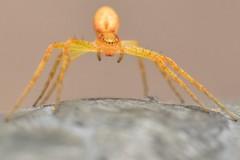 (lucamarasca1) Tags: dettagli nikond5500 d5500 mothernature nikkorlens 50mm14 nikon nikkor wild wildlife ragno details closeup makro macro nature ragni spider