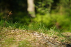 The One (Stierne) Tags: grass forest