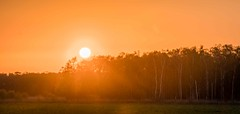 Photo of Sunset Holme Fen