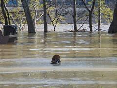 DSC06762 (Fotografías Gaby) Tags: rioebro ebro zaragoza crecida extraordinaria riada rio españa aragón