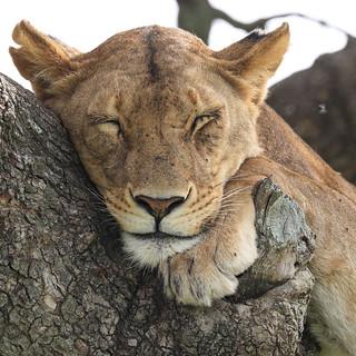 A Good Rest