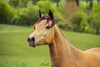 Gucci (PhotOw'graphie) Tags: cheval horse vert extérieur animal
