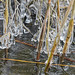 Reeds and ice again